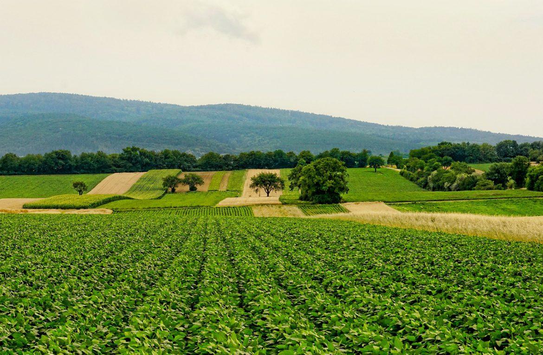 Podpora zemědělství jako jednoho z klíčových nástrojů v boji proti hladu