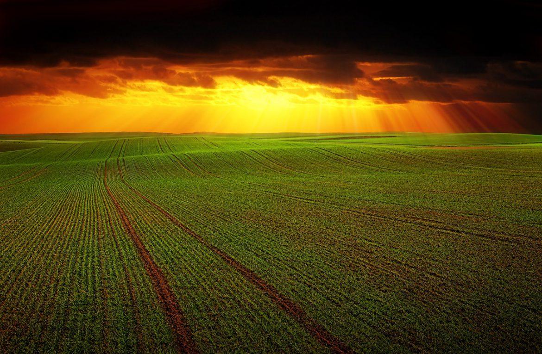 Umělá inteligence a její role v modernizaci zemědělství
