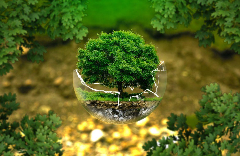 Když důvěřujete zemi – ekologické myšlení v České republice